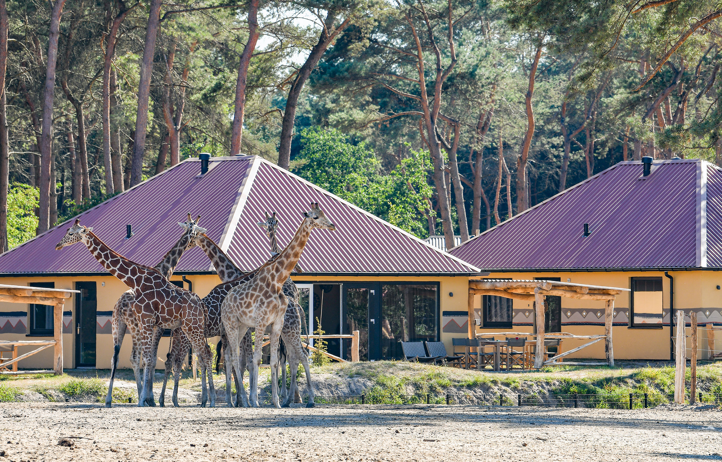 Korting Beekse Bergen Savanne Lodge