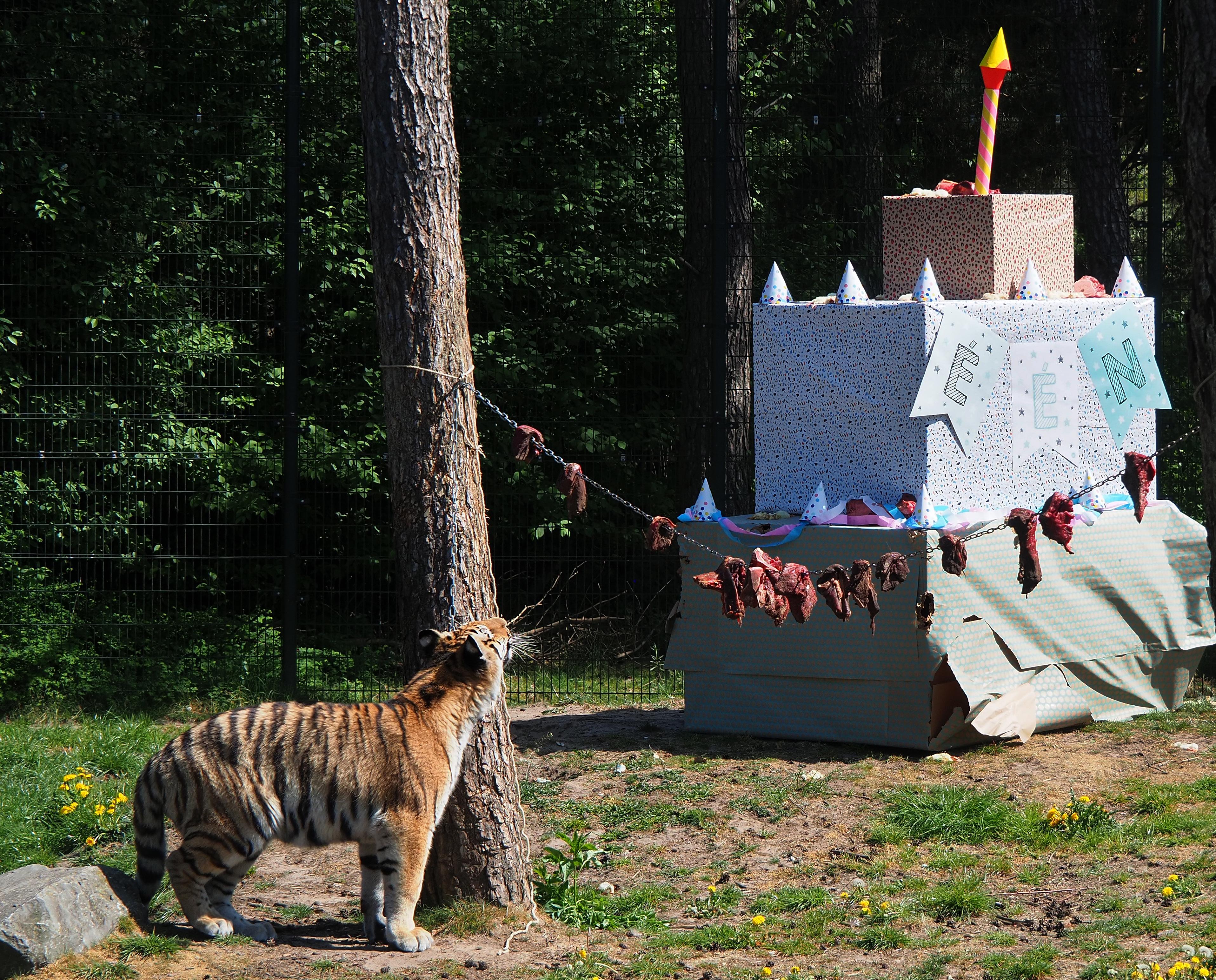 tijgertjes-verjaardag-%283%29.jpg